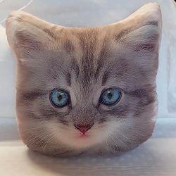 Polštářek kotě
